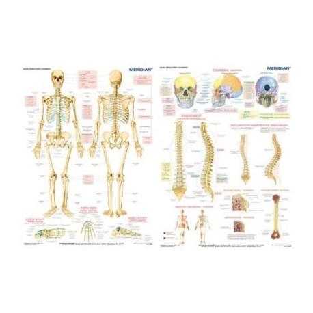 DUO Układ szkieletowy człowieka