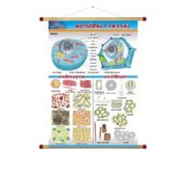 Komórki i tkanki