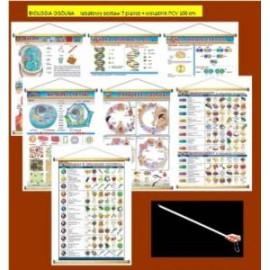 BIOLOGIA OGÓLNA -  rabatowy zestaw 7 plansz + wska