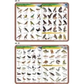 Biologia 022 - podkładka 40x30 cm