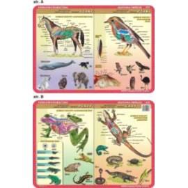 Anatomia zwierząt 053 podkładka 40x30 cm