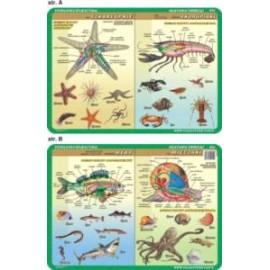 Anatomia zwierząt 054 podkładka 40x30 cm