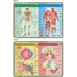 Anatomia człowieka Mikrobiolog 055 podkładka 40x30