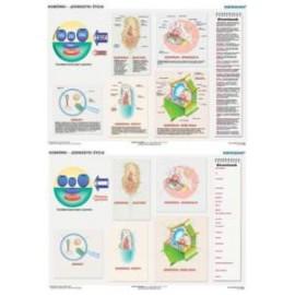 Duo komórki - jednostki życia