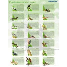 Ptaki naszych łąk i lasów