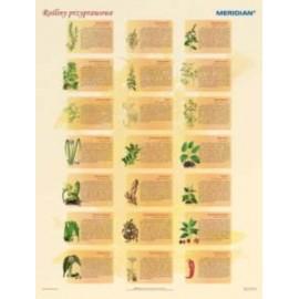 Rośliny przyprawowe