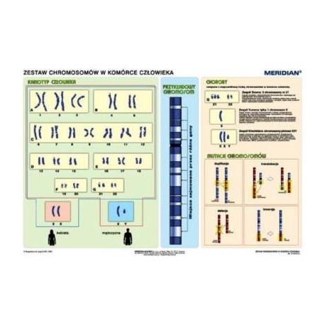 Podstawy genetyki - chromosomy w komórce człowieka