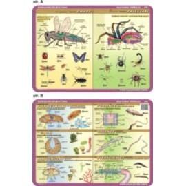 Anatomia zwierząt 052 podkładka 40x30 cm
