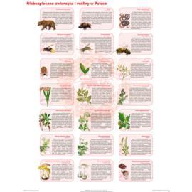 Niebezpieczne zwierzęta i rośliny w Polsce