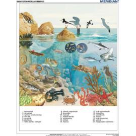 Ekosystem morza ciepłego