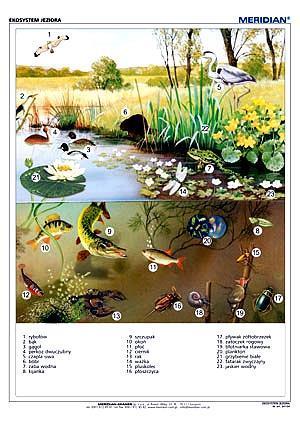 Ekosystem jeziora