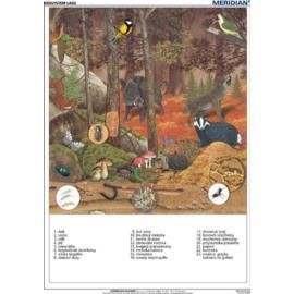 Ekosystem lasu