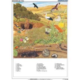 Ekosystem łąki i pola