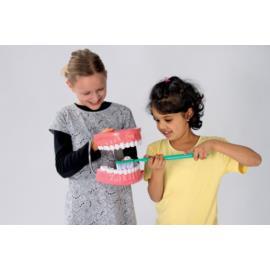 Model do higieny jamy ustnej - stojący