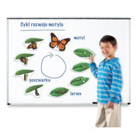 Magnetyczny cykl rozwoju - motyl