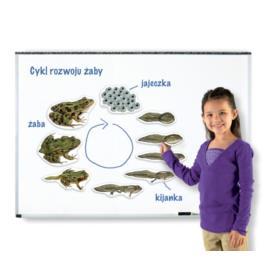 Magnetyczny cykl rozwoju - żaba