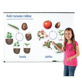Magnetyczny cykl rozwoju - roślina