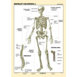 Szkielet człowieka cz. I 100 x140 cm