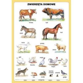 Zwierzęta domowe 100 x140 cm