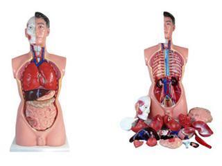 Tułów męski 85 cm wyjmowane organy