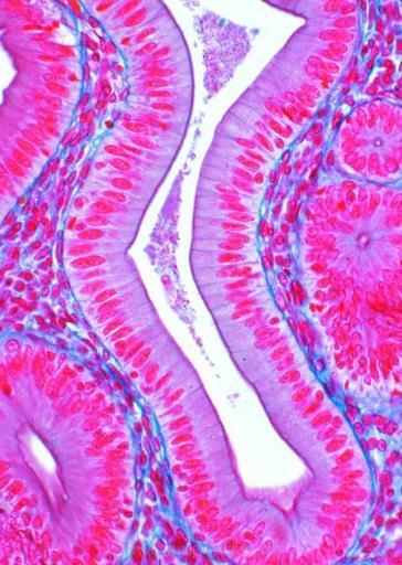 Zdrowe tkanki człowieka część I. 10 preparatów mik