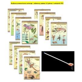 Budowa anatomiczna zwierząt - rabatowy zestaw 12 p